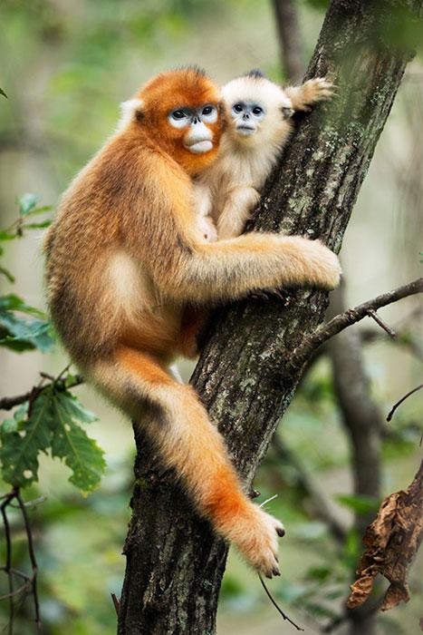 滇金丝猴——丁宽亮摄影作品展